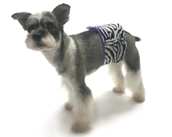 Wild Child Zebra Belly Band  wooflink, susan lanci, dog clothes, small dog clothes, urban pup, pooch outfitters, dogo, hip doggie, doggie design, small dog dress, pet clotes, dog boutique. pet boutique, bloomingtails dog boutique, dog raincoat, dog rain coat, pet raincoat, dog shampoo, pet shampoo, dog bathrobe, pet bathrobe, dog carrier, small dog carrier, doggie couture, pet couture, dog football, dog toys, pet toys, dog clothes sale, pet clothes sale, shop local, pet store, dog store, dog chews, pet chews, worthy dog, dog bandana, pet bandana, dog halloween, pet halloween, dog holiday, pet holiday, dog teepee, custom dog clothes, pet pjs, dog pjs, pet pajamas, dog pajamas,dog sweater, pet sweater, dog hat, fabdog, fab dog, dog puffer coat, dog winter jacket, dog col