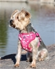 Wrap and Snap Choke Free Harness w/Mesh Lining - Pink Hibiscus Flower wooflink, susan lanci, dog clothes, small dog clothes, urban pup, pooch outfitters, dogo, hip doggie, doggie design, small dog dress, pet clotes, dog boutique. pet boutique, bloomingtails dog boutique, dog raincoat, dog rain coat, pet raincoat, dog shampoo, pet shampoo, dog bathrobe, pet bathrobe, dog carrier, small dog carrier, doggie couture, pet couture, dog football, dog toys, pet toys, dog clothes sale, pet clothes sale, shop local, pet store, dog store, dog chews, pet chews, worthy dog, dog bandana, pet bandana, dog halloween, pet halloween, dog holiday, pet holiday, dog teepee, custom dog clothes, pet pjs, dog pjs, pet pajamas, dog pajamas,dog sweater, pet sweater, dog hat, fabdog, fab dog, dog puffer coat, dog winter jacket, dog col