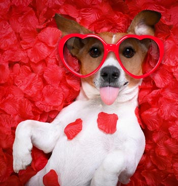 Luxury dog boutique custom small dog clothes designer - Valentines day pictures with puppies ...
