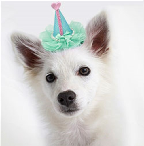 Party Hats - Clip-on wooflink, susan lanci, dog clothes, small dog clothes, urban pup, pooch outfitters, dogo, hip doggie, doggie design, small dog dress, pet clotes, dog boutique. pet boutique, bloomingtails dog boutique, dog raincoat, dog rain coat, pet raincoat, dog shampoo, pet shampoo, dog bathrobe, pet bathrobe, dog carrier, small dog carrier, doggie couture, pet couture, dog football, dog toys, pet toys, dog clothes sale, pet clothes sale, shop local, pet store, dog store, dog chews, pet chews, worthy dog, dog bandana, pet bandana, dog halloween, pet halloween, dog holiday, pet holiday, dog teepee, custom dog clothes, pet pjs, dog pjs, pet pajamas, dog pajamas,dog sweater, pet sweater, dog hat, fabdog, fab dog, dog puffer coat, dog winter jacket, dog col