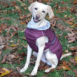 Alpine Extreme Cold Puffer Coat in Burgundy puppy bed,  beds,dog mat, pet mat, puppy mat, fab dog pet sweater, dog swepet clothes, dog clothes, puppy clothes, pet store, dog store, puppy boutique store, dog boutique, pet boutique, puppy boutique, Bloomingtails, dog, small dog clothes, large dog clothes, large dog costumes, small dog costumes, pet stuff, Halloween dog, puppy Halloween, pet Halloween, clothes, dog puppy Halloween, dog sale, pet sale, puppy sale, pet dog tank, pet tank, pet shirt, dog shirt, puppy shirt,puppy tank, I see spot, dog collars, dog leads, pet collar, pet lead,puppy collar, puppy lead, dog toys, pet toys, puppy toy, dog beds, pet beds, puppy bed,  beds,dog mat, pet mat, puppy mat, fab dog pet sweater, dog sweater, dog winter, pet winter,dog raincoat, pet rain