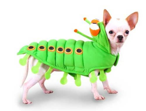 Caterpillar Costume wooflink, susan lanci, dog clothes, small dog clothes, urban pup, pooch outfitters, dogo, hip doggie, doggie design, small dog dress, pet clotes, dog boutique. pet boutique, bloomingtails dog boutique, dog raincoat, dog rain coat, pet raincoat, dog shampoo, pet shampoo, dog bathrobe, pet bathrobe, dog carrier, small dog carrier, doggie couture, pet couture, dog football, dog toys, pet toys, dog clothes sale, pet clothes sale, shop local, pet store, dog store, dog chews, pet chews, worthy dog, dog bandana, pet bandana, dog halloween, pet halloween, dog holiday, pet holiday, dog teepee, custom dog clothes, pet pjs, dog pjs, pet pajamas, dog pajamas,dog sweater, pet sweater, dog hat, fabdog, fab dog, dog puffer coat, dog winter jacket, dog col