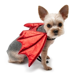 Dragon Wings wooflink, susan lanci, dog clothes, small dog clothes, urban pup, pooch outfitters, dogo, hip doggie, doggie design, small dog dress, pet clotes, dog boutique. pet boutique, bloomingtails dog boutique, dog raincoat, dog rain coat, pet raincoat, dog shampoo, pet shampoo, dog bathrobe, pet bathrobe, dog carrier, small dog carrier, doggie couture, pet couture, dog football, dog toys, pet toys, dog clothes sale, pet clothes sale, shop local, pet store, dog store, dog chews, pet chews, worthy dog, dog bandana, pet bandana, dog halloween, pet halloween, dog holiday, pet holiday, dog teepee, custom dog clothes, pet pjs, dog pjs, pet pajamas, dog pajamas,dog sweater, pet sweater, dog hat, fabdog, fab dog, dog puffer coat, dog winter jacket, dog col