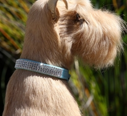 Giltmore Collar by Susan Lanci in 2, 3 or 4 Row Crystal