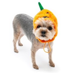 Jack-O-Hat Roxy & Lulu, wooflink, susan lanci, dog clothes, small dog clothes, urban pup, pooch outfitters, dogo, hip doggie, doggie design, small dog dress, pet clotes, dog boutique. pet boutique, bloomingtails dog boutique, dog raincoat, dog rain coat, pet raincoat, dog shampoo, pet shampoo, dog bathrobe, pet bathrobe, dog carrier, small dog carrier, doggie couture, pet couture, dog football, dog toys, pet toys, dog clothes sale, pet clothes sale, shop local, pet store, dog store, dog chews, pet chews, worthy dog, dog bandana, pet bandana, dog halloween, pet halloween, dog holiday, pet holiday, dog teepee, custom dog clothes, pet pjs, dog pjs, pet pajamas, dog pajamas,dog sweater, pet sweater, dog hat, fabdog, fab dog, dog puffer coat, dog winter ja