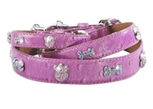 Paws & Bones House of Dog Collar
