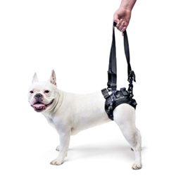 Rear Lift Dog Harness