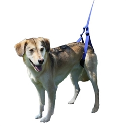 Rear Walking Support Leash